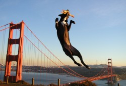 golden-gate-dog-rubber-chicken-1550-1233603649-52
